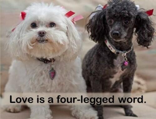 Adopt a senior dog from a rescue organization