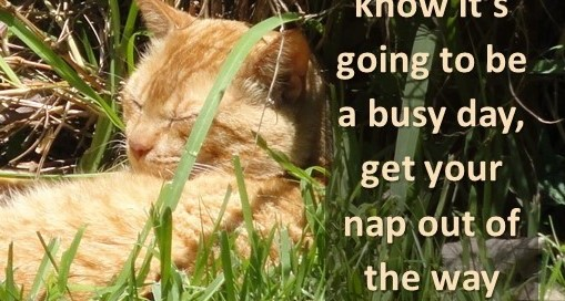 When you know it's going to be a busy day, get your nap out of the way first.